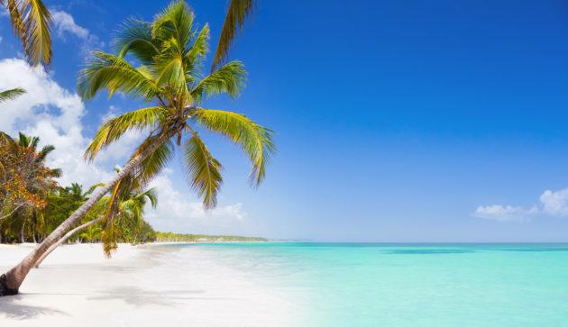 Dom Rep Palmen Strand
