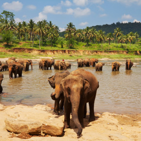 Endlich frei: 78 Elefanten aus einem Camp in Thailand werden freigelassen