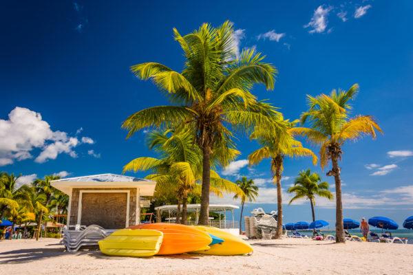 Miami Strand mit Palmen