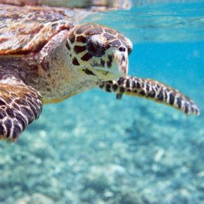 Frühbucher: Günstige Hin- & Rückflüge auf die Seychellen inkl. Gepäck nur 430€