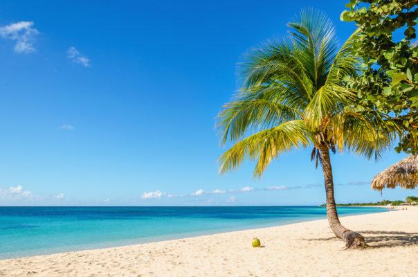Toller Strand mit Palmen und Kokusnüssen auf Jamaika