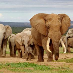 Sofa-Safari: Per Live-Webcam auf virtuelle Safari in Afrika