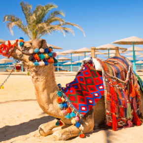 Ägypten im Sommer 2021: 7 Tage im 4* Hotel mit Halbpension, Flug & Transfer nur 332€