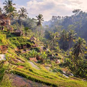 Frühbucher Bali: 16 Tage Ubud mit toller Unterkunft & Flug nur 461€