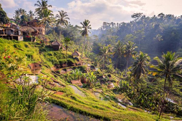 Bali Felder