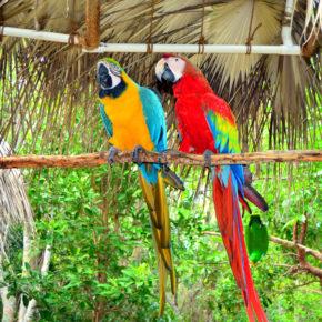 Privatinsel auf Jamaika: 8 Tage im TOP 5* Luxusresort mit All Inclusive, Flug & Transfer nur 2.462€