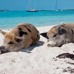 Karibik Frühbucher: 8 Tage Curacao in guter Unterkunft inkl. Flug nur 575€
