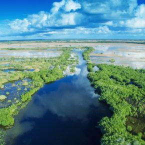 Everglades Tour: Ein Trip durch die sumpfigen Feuchtgebiete Floridas
