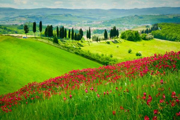Italien Toskana Wiese