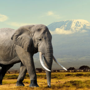 Abenteuer Afrika: 15 Tage Kenia mit Strandunterkunft & Flug nur 497€