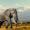 Abenteuer Afrika: 14 Tage Kenia in Strandunterkunft mit Pool & Flug nur 586€