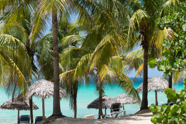 Kuba Varadero Palmen