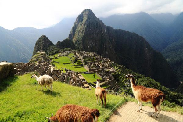 Peru Machu Picchu Lamas