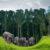 Koh Chang Elefanten