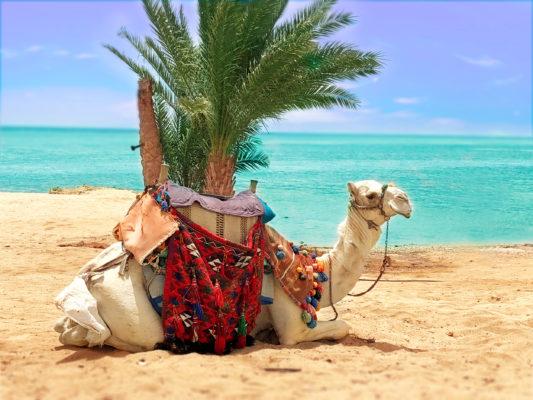 Ägypten Marsa Alam Kamel