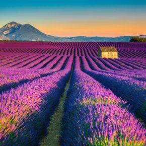 Provence zur Lavendelblüte 2021: Hin- & Rückflüge nach Marseille nur 53€