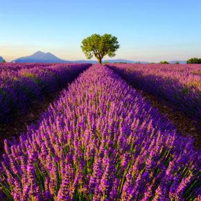 Frankreich zur Lavendelblüte: 3 Tage im 3* Hotel und Flug für 89€