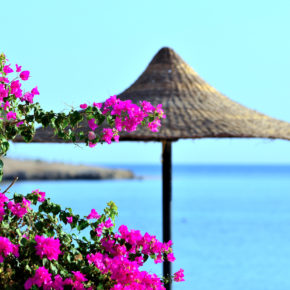 Hurghada Frühbucher: 7 Tage Ägypten im TOP 4* Albatros Hotel mit All Inclusive, Flug & Transfer nur 339€