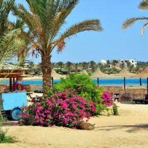 Ägypten Marsa Alam Blumen