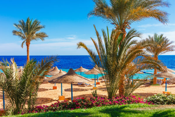 Ägypten Strand Palmen