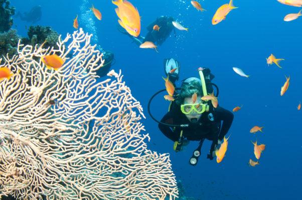 Australien Great Barrier Reef Tauchen