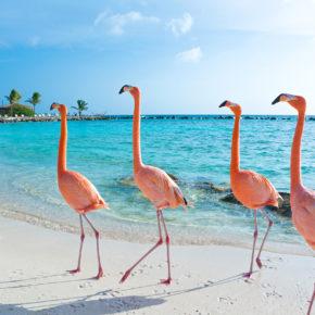 Karibik: 14 Tage Aruba in guten Hostel & Flug um 617€