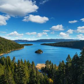 USA Lake Tahoe Bäume
