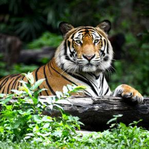 Die Top 10 der besten Zoos in Österreich