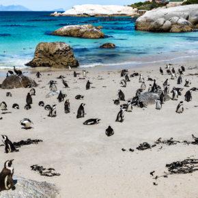 Pinguin-Party in Südafrika: 8 Tage nach Kapstadt mit guter Unterkunft & Flug nur 531€
