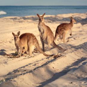 Australien Guide: Tipps für Eure Reise nach Down Under