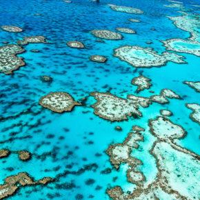 Tauchen am Great Barrier Reef: Die besten Divespots am größten Korallenriff der Erde
