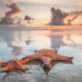 Bali Seminyak Strand Seestern