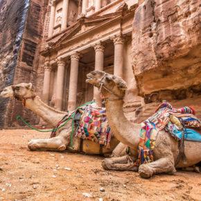 Jordanien Al Khazneh Petra Kamele