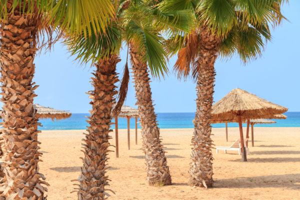 Kap Verde Bovista Palmen