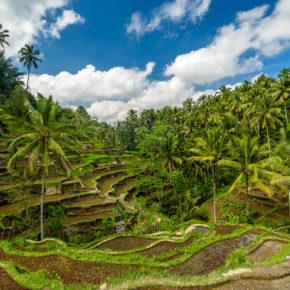 Frühbucher Bali: 14 Tage im guten 4* Hotel in Strandnähe mit Flug um 579€