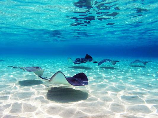 Cayman Islands Rochen Unterwasser