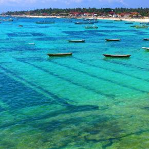 Nusa Lembongan Seegras