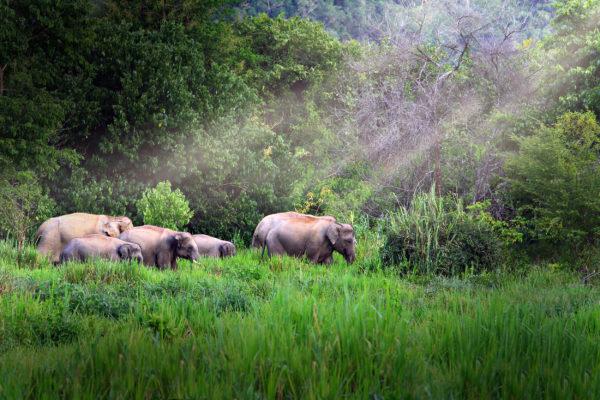 Thailand Kui Buri Nationalpark