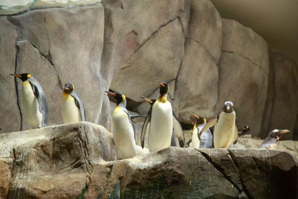 Hamburg Zoo Pinguine