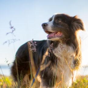 Dänemark mit Hund: Anreise, Informationen & beliebte Reiseziele mit Euren Vierbeinern