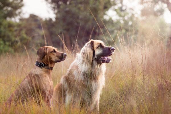 Hunde Gras Wiese