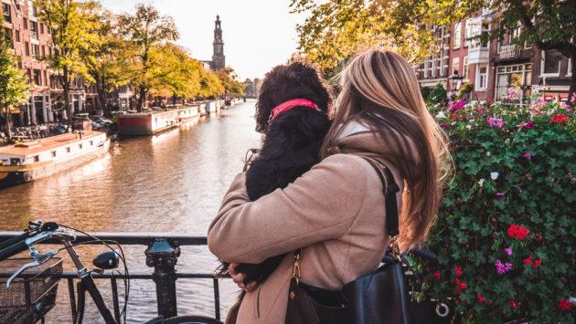 Niederlande Amsterdam Hund