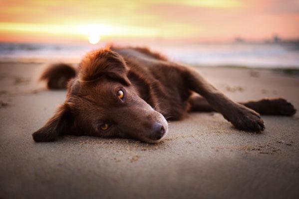 Niederlande Hund Strand