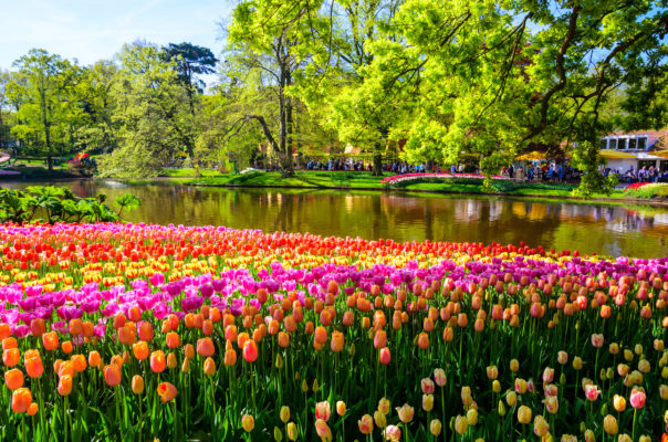 Niederlande Keukenhof Tulpen See