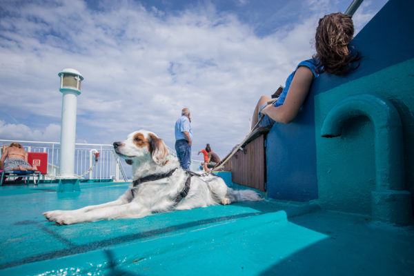 Kreuzfahrt Hund Deck