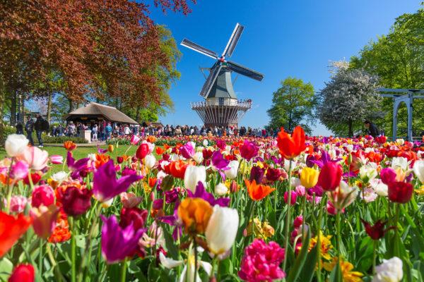 Niederlande Muehle Blumen