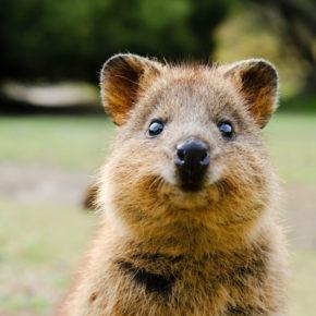 Urlaubs-Insel wird zur Quarantäne-Insel: 800 Menschen isoliert mit den süßesten Tieren Australiens