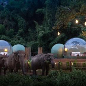 Once-in-a-lifetime: Schlaft in Thailand in atemberaubender Jungle Bubble neben Elefanten