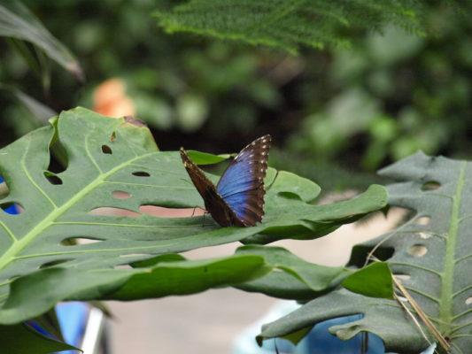 Deutschland Usedom Schmetterlingsfarm