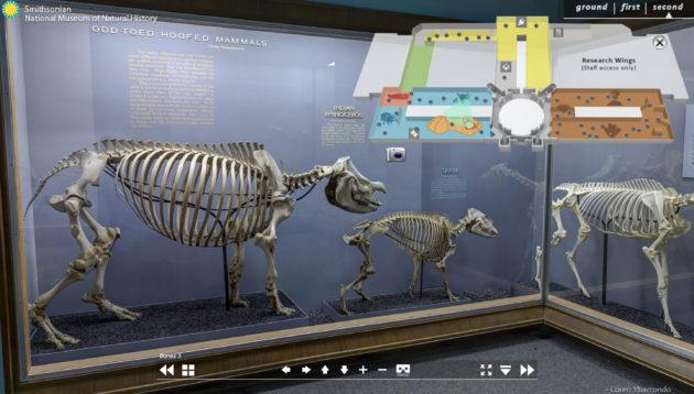 Smithsonian Naturkunde Skelette